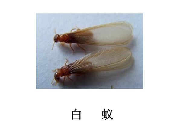 遂宁灭虫公司-灭白蚁