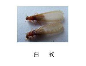 船山区灭虫公司-灭白蚁
