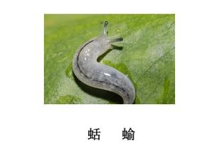 遂宁灭虫公司-灭蛞蝓(鼻涕虫)