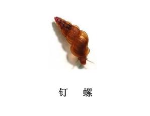 遂宁灭虫公司-钉螺防治