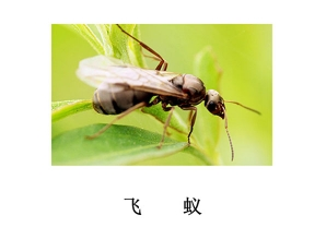 遂宁灭虫公司-飞蚁防治