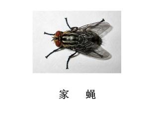 遂宁灭蝇公司-灭家蝇