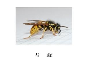 遂宁灭虫公司-灭马蜂