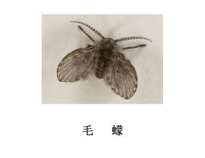 遂宁灭虫公司-毛蠓防治