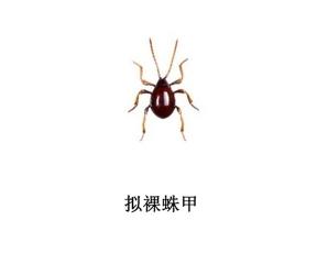 遂宁灭虫公司-灭拟裸珠甲