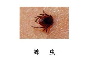 遂宁灭虫公司-灭蜱虫