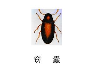 遂宁灭虫公司-灭窃蠹