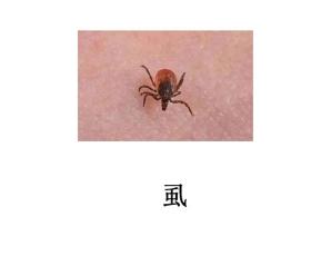 遂宁灭虫公司-灭虱