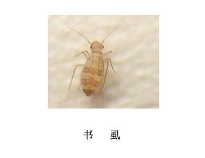遂宁灭虫公司-灭书虱