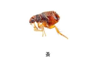 遂宁灭虫公司-灭跳蚤