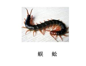 遂宁灭虫公司-灭蜈蚣