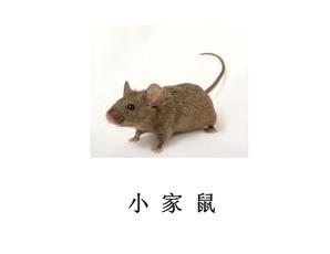 遂宁灭鼠公司-灭家鼠