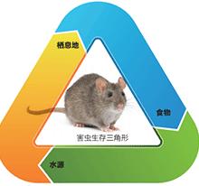 遂宁灭鼠公司